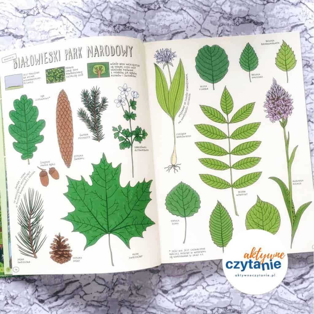 Którędy doYellowstone? ksiązki dla dzieci recenzja aktywne czytanie 3