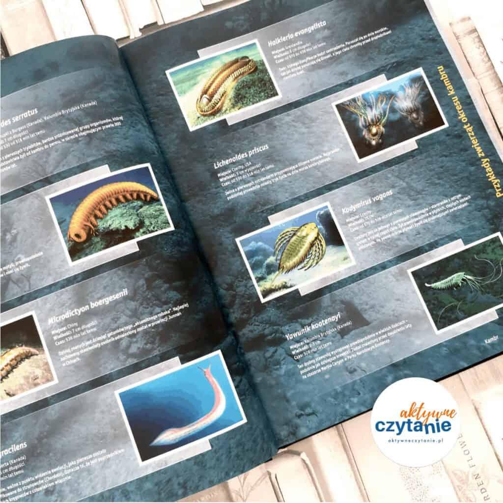 dinozaury iinne pradawne zwierzęta olesiejuk ksiązki dla dzieci aktywne czytanie 12