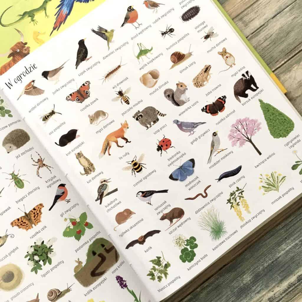 encyklopedia-obrazkowa-przyroda