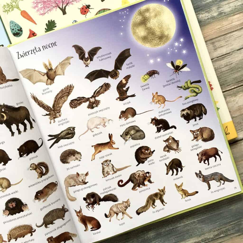 encyklopedia-obrazkowa--zwierzeta