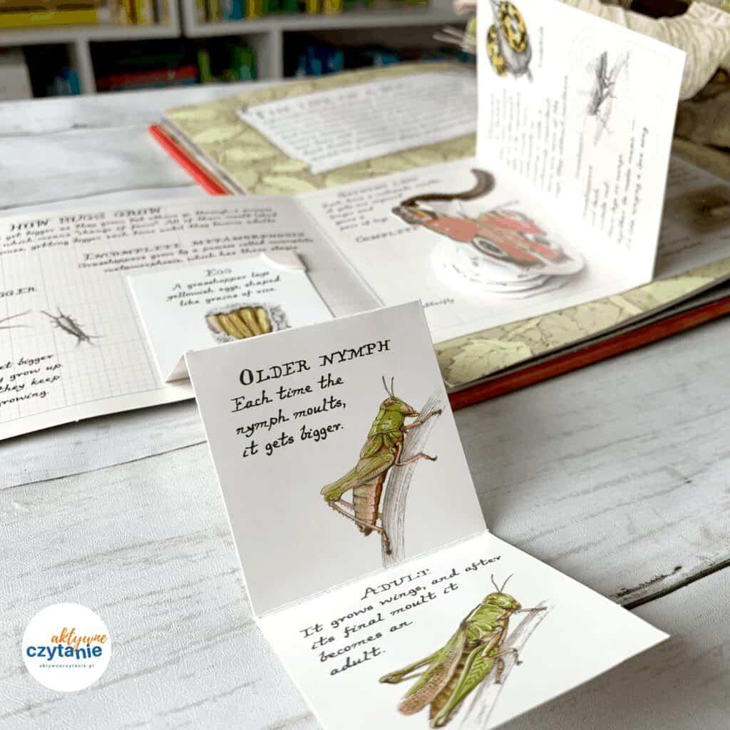 ksiazki pop up dla dzieci recenzja bugs ksiazka dla 5 latka1