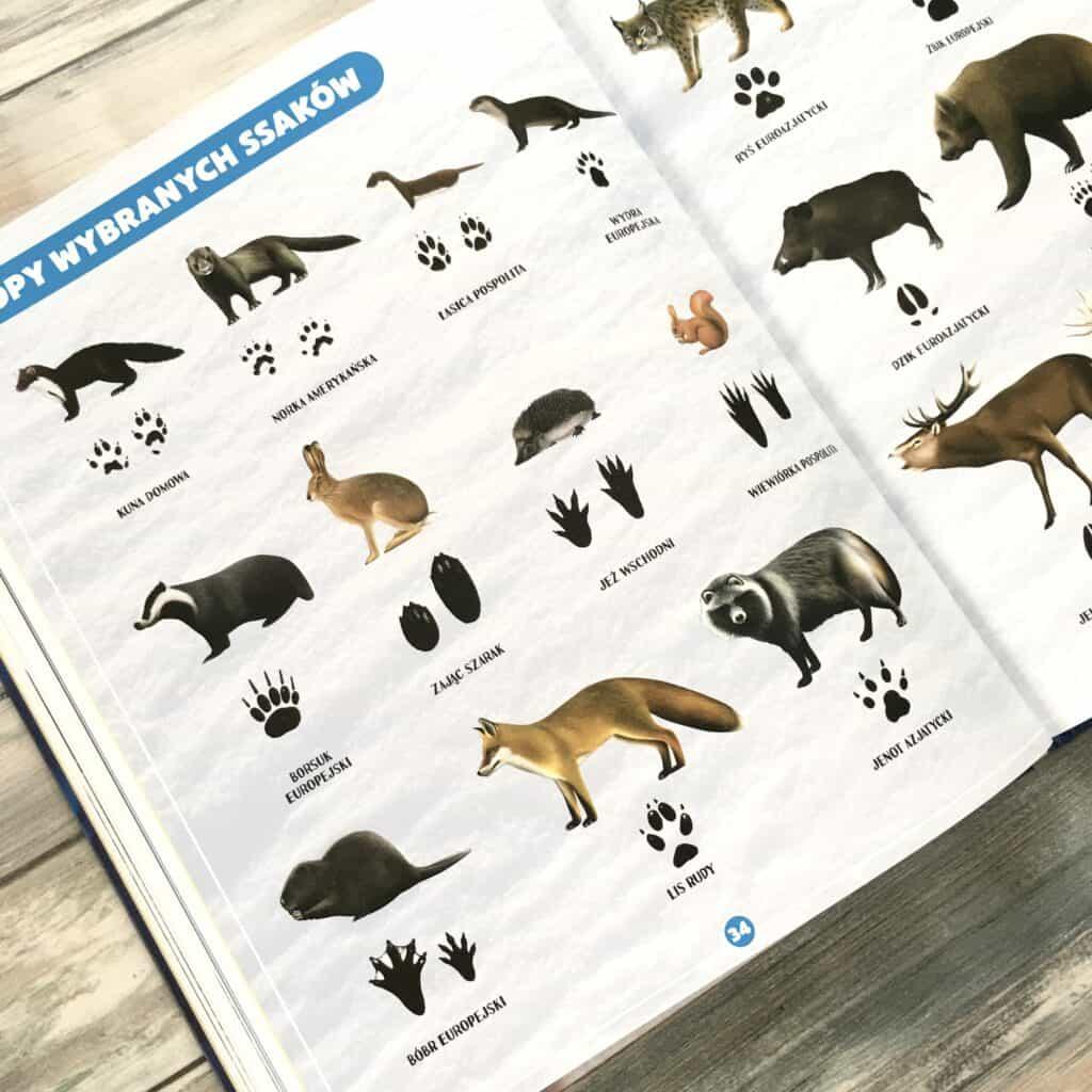 gdzie ten ssak wyszukiwanka naspostrzegawczosc ksiazki dla dzieci5
