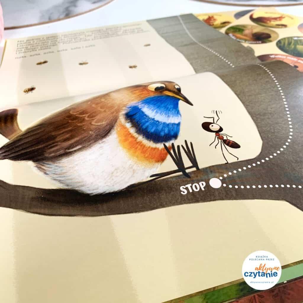 ptak imrówka